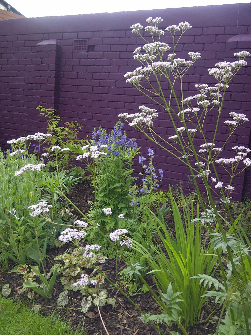 urban garden wall