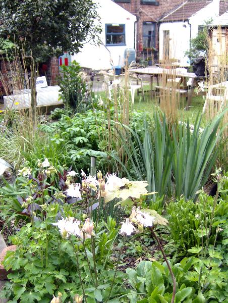 communal garden flowers