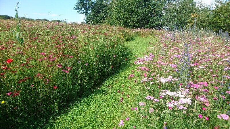 mown paths through meadow