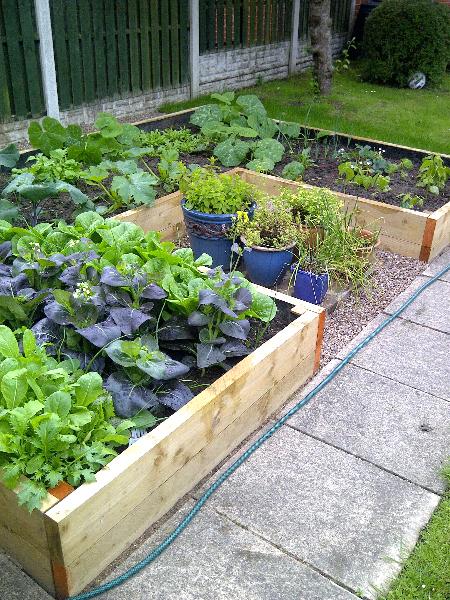 Raised plants
